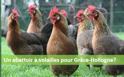 Permis accordé pour l'abattoir à volailles de Grâce-Hollogne