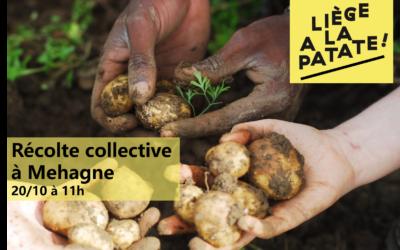 Récolte de Pommes de Terre avec «Liège A La Patate» à Mehagne 20/10