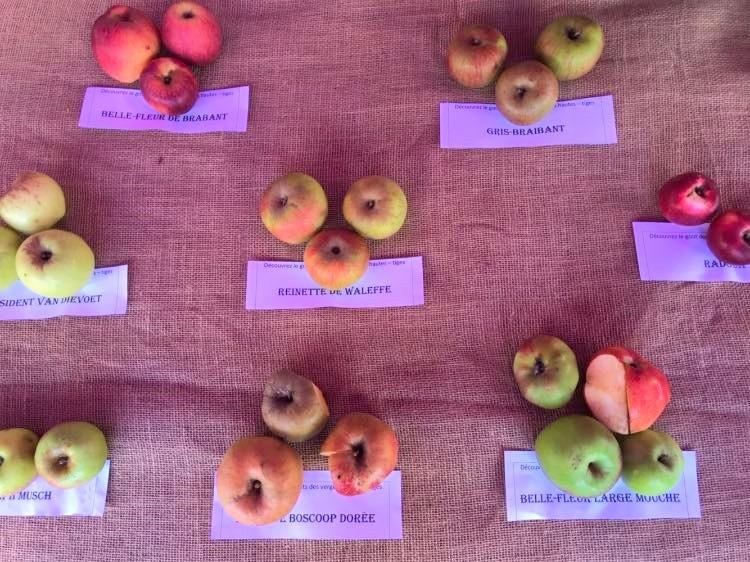 L'importance des Vergers Hautes – Tiges avec Diversifruits
