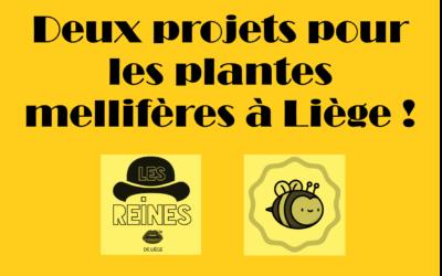 Des projets liégeois pour les abeilles avec les asbl Sauvons Maya et les Reines de Liège