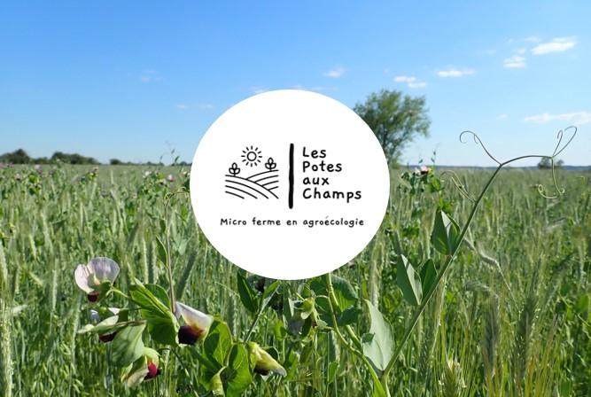 Les Potes Aux Champs : un nouveau CSA en région liégeoise
