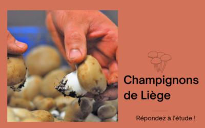 Étude de marché «champignons en ville» : pour une production liégeoise !